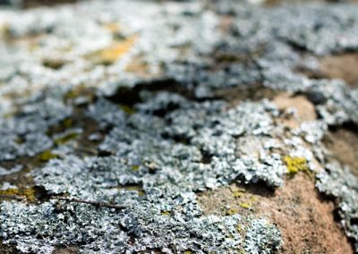 The soft blue color of this lichen was on many of the rocks.