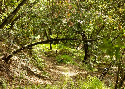 There is a magic in the trails at the White Lotus.
